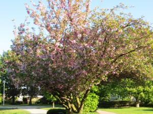 Mandelbaum-Aasee-gr